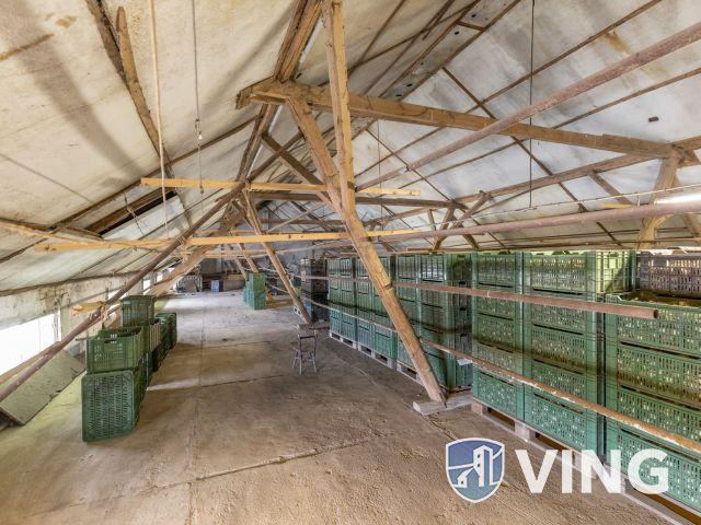 Makói, mezőgazdasági tanya/telephely eladó!